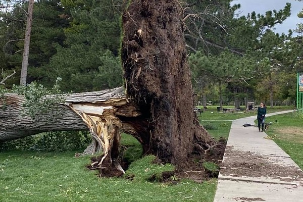 Restoring Trees After a Storm